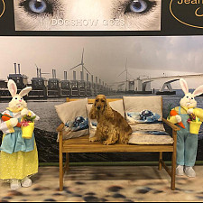 20 april 2019: Dogshow Goes